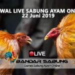 Jadwal Sabung Ayam Online S128 Dan SV388 22 Juni 2019