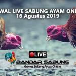 Jadwal Sabung Ayam Online S128 Dan SV388 16 Agustus 2019