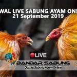 Jadwal Sabung Ayam Online S128 Dan SV388 21 September 2019