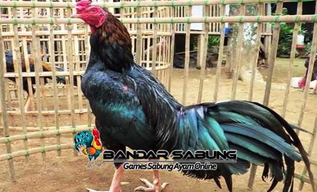 Fakta Ayam Bangkok Gombong, Kebumen yang Mendunia