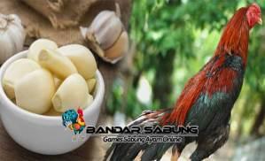 ManfaatBawang Putih Untuk Ayam Aduan