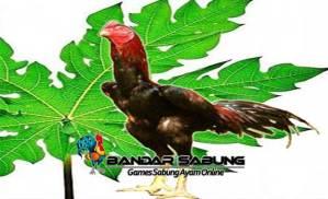 Manfaat Daun Pepaya Untuk Ayam Bangkok