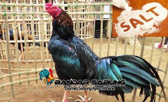 Manfaat Garam Untuk Ayam Bangkok