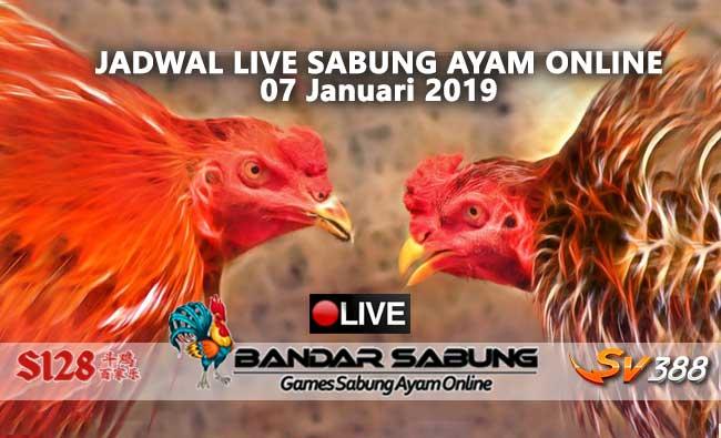 jadwal sabung ayam online s128 dan sv388 07 januari 2019
