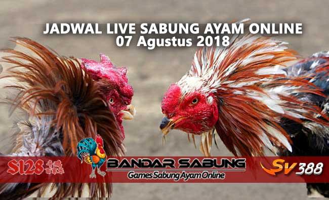 Jadwal Sabung Ayam Online S128 Dan SV388 07 Agustus 2018