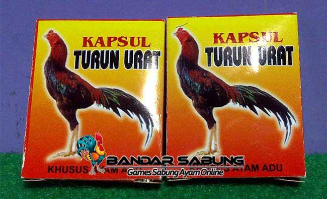 Cara Mengobati Ayam Aduan Turun Urat