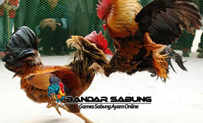 Jenis Kekuatan Utama Ayam Bangkok
