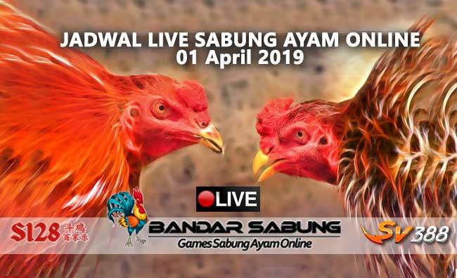 jadwal sabung ayam online s128 dan sv388 01 april 2019