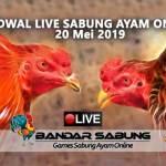 Jadwal Sabung Ayam Online S128 Dan SV388 20 Mei 2019