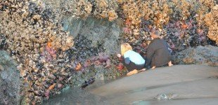 tide pools and starfish at low tide