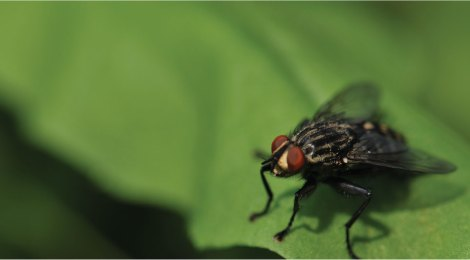 THE FLY HAS NO PITY