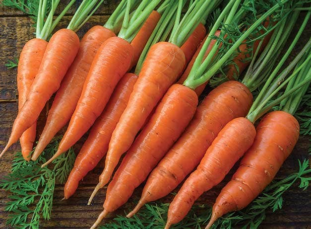 Benefits, Uses and Disadvantages of Carrots