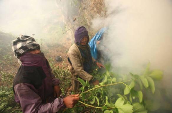 memburu madu dengan asap