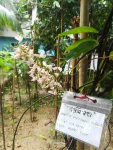 মিনি সুন্দরবন