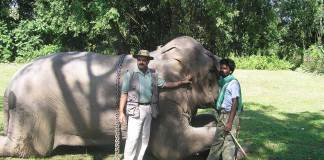 elephant man of asia