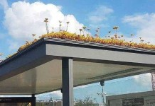 bus stops green roof netherlands