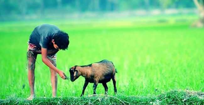 bangladesh image f