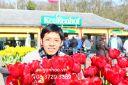 hoa tulip sgh