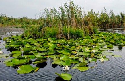 Mihai Puflene, fondator Puflene Resort din Delta Dunării. Suntem vizitaţi de 22.000 de turişti anual, dar estimăm o înjumătăţire anul acesta, pe fondul pandemiei