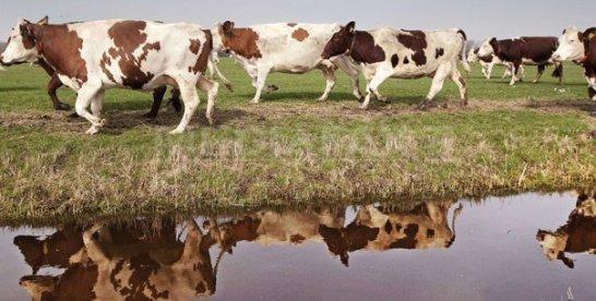 Preşedintele cooperativei Someş Arieş, formată din 70 de fermieri: Singura şansă de supravieţuire pentru fermele mici este asocierea