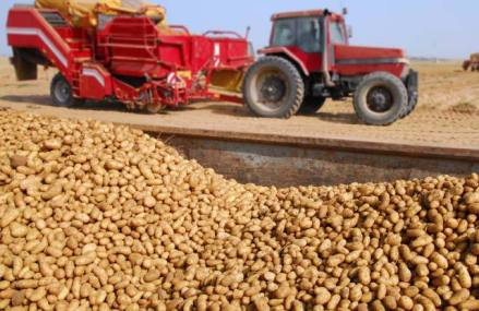 """Ce se întâmplă cu producţia de cartofi? """"Din cauza secetei nu putem să recoltăm, iar sisteme de irigaţii nu avem. Producţiile au scăzut şi fermierii speră să-şi acopere costurile"""""""