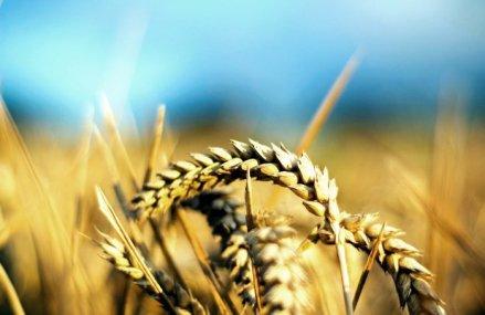 Recolte agricole: Spania mizează pe şomeri şi imigranţi