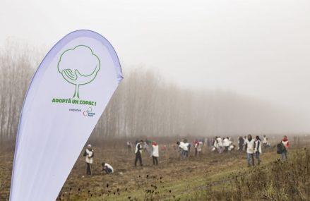 """21.000 de puieți plantați toamna aceasta de ViitorPlus, prin proiectul """"Adoptă un copac!"""""""