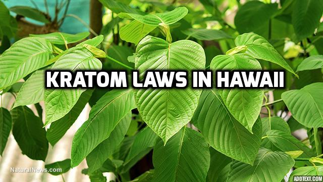 Kratom Laws In Hawaii