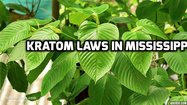 Kratom Laws In Mississippi