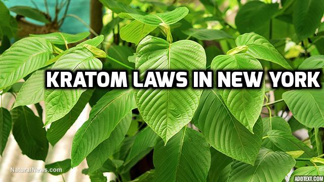 Kratom Laws In New York