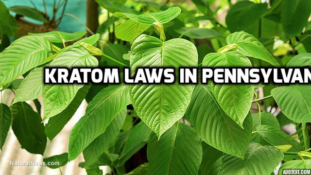 Kratom Laws In Pennsylvania