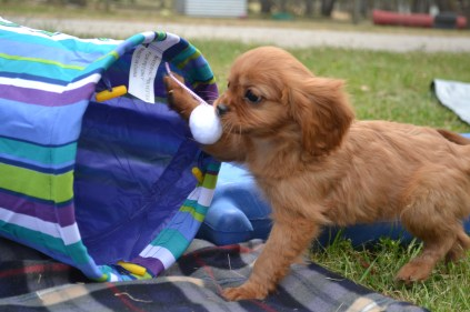 Biting different textures and learning how to use paws and teeth and discovery