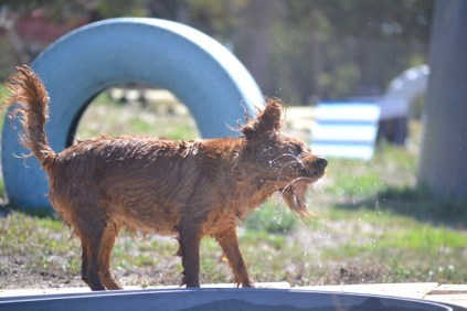 Banksia Park Puppies Playgrounds - 1 of 25 (9)