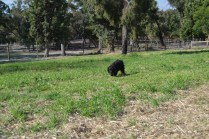 ADULT AGILITY PARK- Banksia Park Puppies - 29 of 117