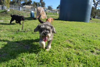 ADULT AGILITY PARK- Banksia Park Puppies - 37 of 117
