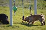 banksia-park-puppies-jazz-11-of-41