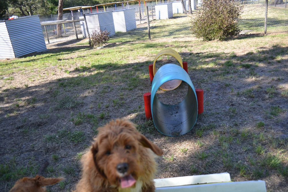 Banksia Park Puppies Playground