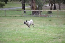 Banksia Park Puppies Smuggly