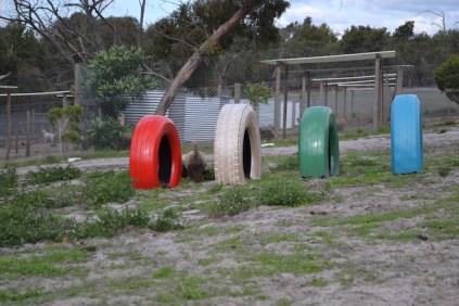 Banksia Park Puppies Ayasha - 12 of 36