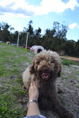 Banksia Park Puppies Ayasha - 22 of 36