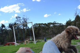 Banksia Park Puppies Ayasha - 8 of 36