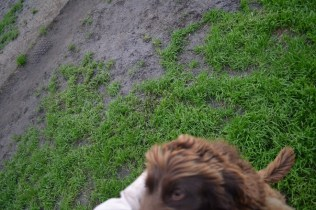 Banksia Park Puppies Bailey Whoopy - 14 of 34
