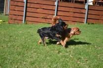 Banksia Park Puppies Bitsy