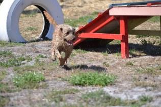Banksia Park Puppies Brutus - 1 of 20 (14)