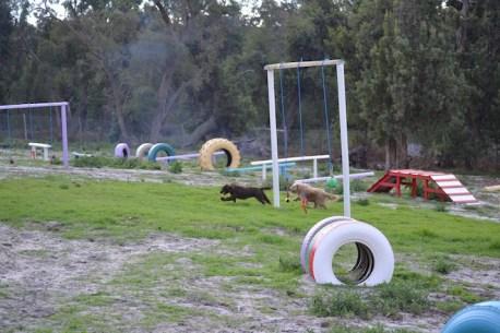 Banksia Park Puppies Brutus - 5 of 14