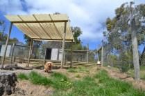 Banksia Park Puppies Chloe