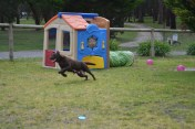 Banksia Park Puppies Mishka - 15 of 20