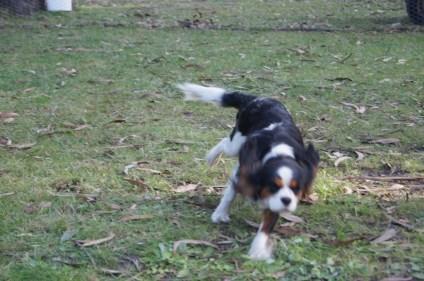 Banksia Park Puppies Rita