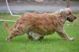 Banksia Park Puppies Sahara