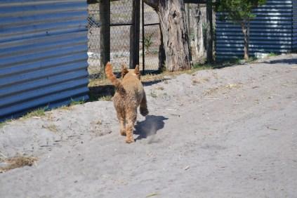 Banksia Park Puppies Skitz - 1 of 3 (1)